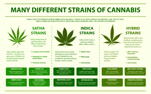 Infographic that displays different cannabis strains and information. Includes information about sativa, indica and hybrids