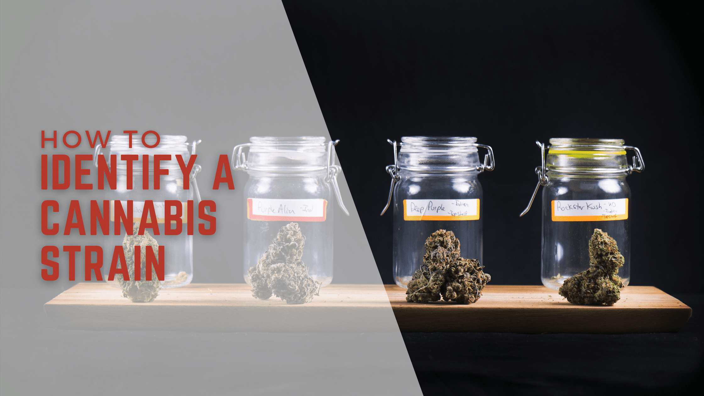 How Does One Identify a Cannabis Strain?
