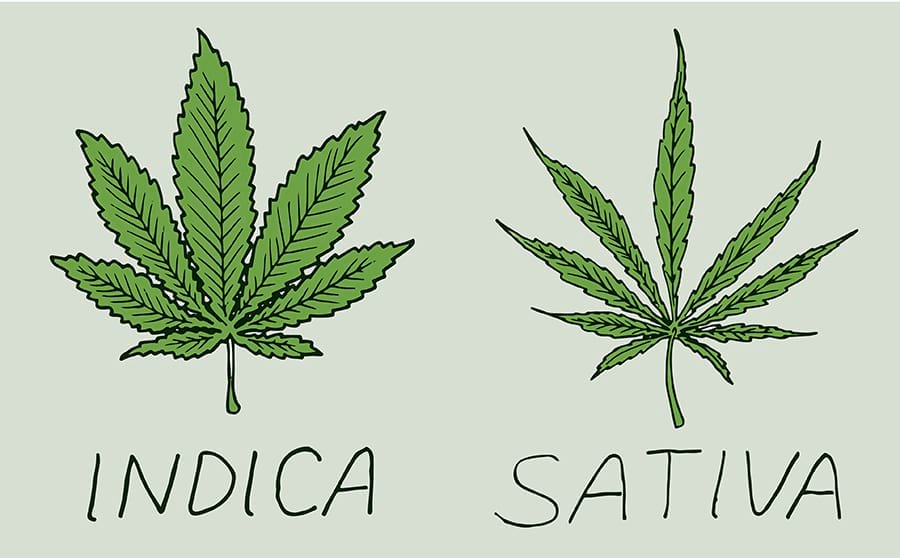 wsi imageoptim difference between sativa and indica www.endoca.com