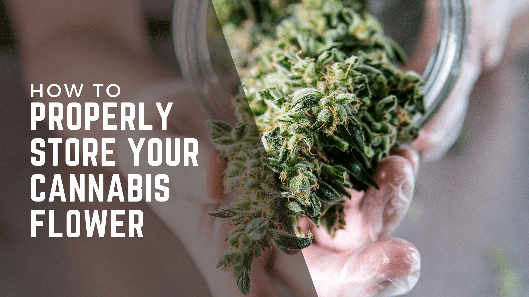 Image of cannabis coming out of a jar with the text how to properly store your cannabis flower