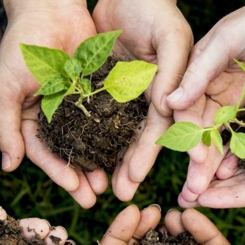 Plant A Tree Hakuna 1